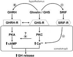 ghrp6-4